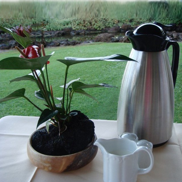 Blogging with Coffe in Hawaii
